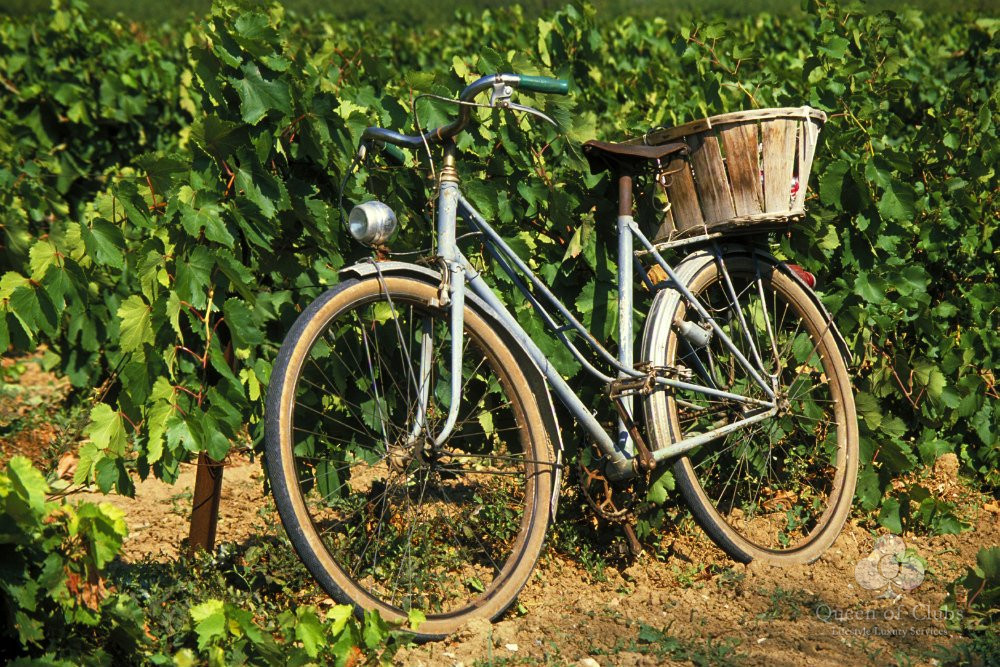 BIKING THE VINEYARDS OF SAINT EMILION.jpg